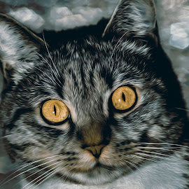 Kitty by Karen Raymond Burke - Animals - Cats Portraits ( cat, yellow eyes, bokeh, tabby, portrait )