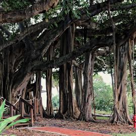 by Patrick Sherlock - Nature Up Close Trees & Bushes