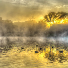 The dam by Peter Schoeman - City,  Street & Park  City Parks ( grasses, water, spider webs, fog, trees, sunrise, fields )