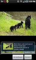 Screenshot of Alaska Critters Free