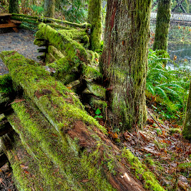 Fence along the Old Mill Stream by Doug Keder - Landscapes Forests (  )