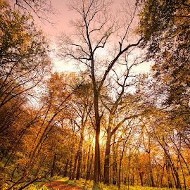 Fall Tree by Brandon Engel - Nature Up Close Trees & Bushes ( omaha, tree, sunset, fall, october, nebraska,  )