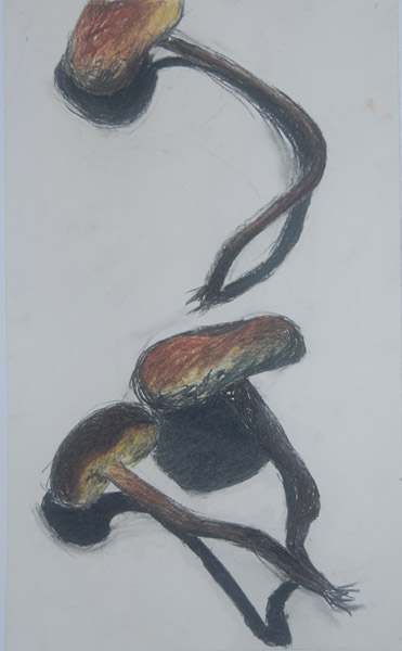 Three Mushrooms <br> Pastel, oil pastel, charcoal on paper <br> 11 x 18 in