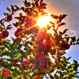 by Derrill Grabenstein - Food & Drink Fruits & Vegetables