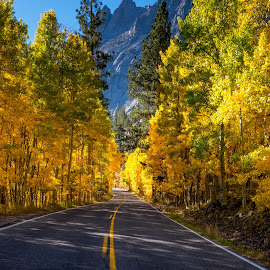 June Lake Loop by Mark Cote - Landscapes Forests ( june lake loop, fall colors, silver lake, road, sierra nevada mountains, fall, color, colorful, nature,  )