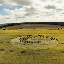 2014 Crop Circle in Wiltshire by Mat Gyro - Landscapes Prairies, Meadows & Fields ( crop circle )