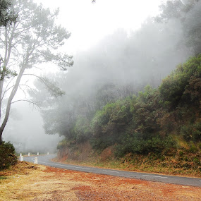 Misty road by Aleksey Maksimov - Landscapes Mountains & Hills ( mountain, riad, fog, trees, madeira, mist )