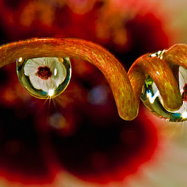 Drops with mallow by David Winchester - Nature Up Close Natural Waterdrops