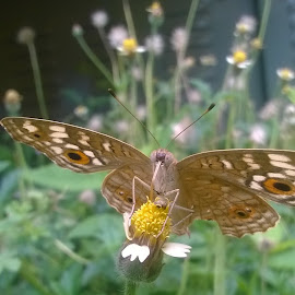Beauty of Butterfly by Chidambaram Shiva - Instagram & Mobile Other ( abstract, macro, nature, travel, insects )