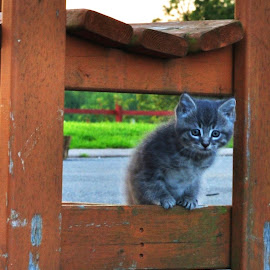 wee cutie !! by Tracy Lawler - Animals - Cats Kittens