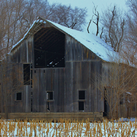 Kansas Snowy Barn and Field by Robert D Brozek - Landscapes Prairies, Meadows & Fields ( wood, white, door, window's, stalks, field, roof, winter, season, barn, tree, snow, tree's, kansas,  )