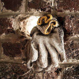 Forgotten gloves by Nicky Staskowiak - Artistic Objects Clothing & Accessories ( gloves, forgotten, decay, artistic, object )