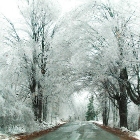 Ice Storm in Michigan 2013 by Christine Weaver-Cimala - Landscapes Weather ( canon, t3i, 2013, road, 600d, storm, landscape, december, mother nature, tree, nature, ice, trees, weather )