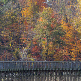 Autumn colors by the boardwalk by Chuck Campbell - Landscapes Forests ( k3, nature, tree, autumn, manual focus, smc pentax a 400mm f5.6, pentax, leaves )