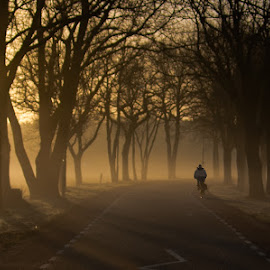 Solitude by Milos Vasic - City,  Street & Park  City Parks ( shine, travel, road, morning, people, netherlands, bike, riding, drive, lifestyle, silhouettes, sunrise, alone, culture, golden, renewal, green, trees, forests, nature, natural, scenic, relaxing, meditation, the mood factory, mood, emotions, jade, revive, inspirational, earthly,  )