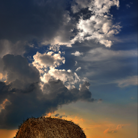 by Manuela Dedić - Landscapes Prairies, Meadows & Fields