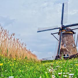Moara - The windmill by Constantinescu Adrian Radu - Landscapes Travel ( kinderdijk, windmill, netherlands,  )