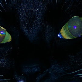 Cat Eye Galaxy by Buddy Boyd - Animals - Cats Portraits ( macro, cat, cateye, close up, eye )