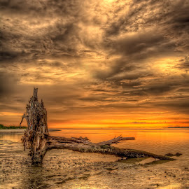 Golden Hour Driftwood by Bill Camarota - Landscapes Beaches ( driftwood, florida, sunset, beach, golden )