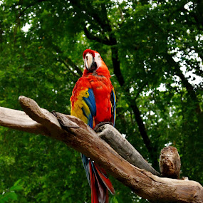 Look At Me by Mohd Khairil Hisham Mohd Ashaari - Animals Birds ( bird, birds,  )