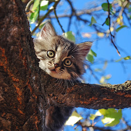Fluffy kitten by Maja  Marjanovic - Animals - Cats Kittens ( cats, animals, tree, kittens, cute )