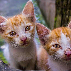 by Soumyaroop  Chatterjee  - Animals - Cats Kittens ( colour, contrast, cat, kolkata, street, canon 550d,  )