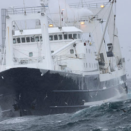 Bering Sea Winter Trawling by Jack Molan - Transportation Boats ( winter, tough conditions, comercial fishing, ship, ice, gale, fishing, frozen, storm, boat, bering sea )