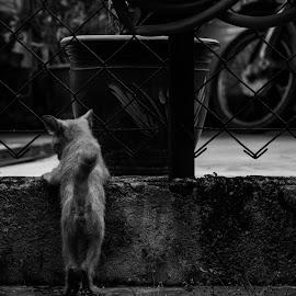waiting by Afzal Rddz - Animals - Cats Kittens ( cats, dahanranting, kitten, nikon,  )