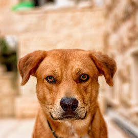 Simba by Robert Namer - Animals - Dogs Portraits ( look, looking, best friends, friends, dogs, glance, nice, best, nikon, natural, portrait, animal )