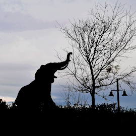 Elephant by Lin Fauke - Animals Other Mammals ( clouds, trunk, sky, tree, zoo, elephant, night )