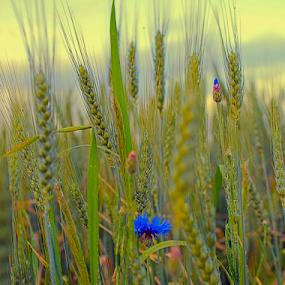 by Branka Radmanić - Nature Up Close Leaves & Grasses