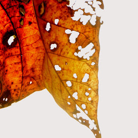 Dying leaf  by Ashimananda Chowdhury - Abstract Patterns