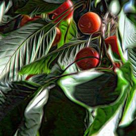 Cherry Tree in Backyard by Nat Bolfan-Stosic - Nature Up Close Trees & Bushes ( cherry, red, sweet, tree, backyard )