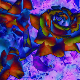 red and blue roses by B l  Beirne - Digital Art Things ( digitalized rose, photoshoped roses, roses, 3 roses, eye-popping roses )