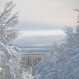 Winter wonderland by Ewa Nilsson - Landscapes Forests ( sweden, winter, lapland, snow, trees )