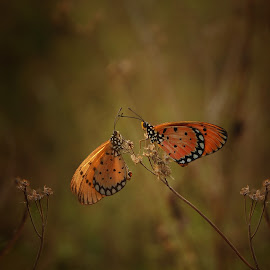 with you by M Iwan - Animals Insects & Spiders