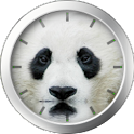 Panda Bear Theme icon