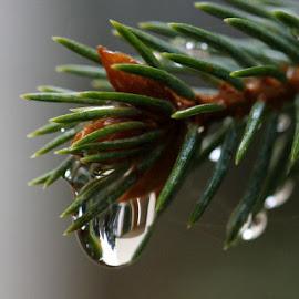 by РАЙНА СИНДЖИРЛИЕВА - Nature Up Close Trees & Bushes