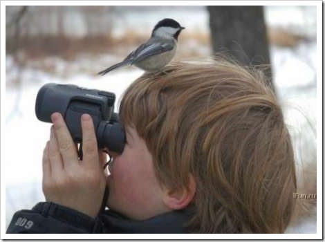 Funny bird picture - Kid with bird on his head.