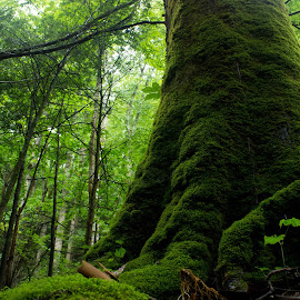 Mossy Tree by Bradley Philport - Nature Up Close Trees & Bushes ( overgrowth, mossy tree, tennessee, gatlinburg )