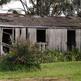 falling apart by Helly Maree - Buildings & Architecture Decaying & Abandoned ( shed, tree, grass, green, abandoned )