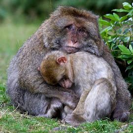 by Dave Hudson - Animals Other Mammals