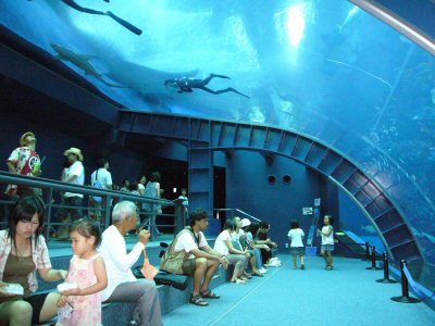 an image of the Okinawa Churaumi Aquarium