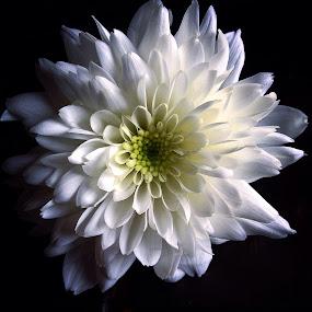 by David Monjou - Flowers Single Flower