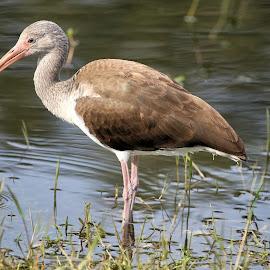 Sunday Mornings Best 7 by Terry Saxby - Animals Birds ( bird, terry, florida, zephyrhills, usa, saxby, nancy )