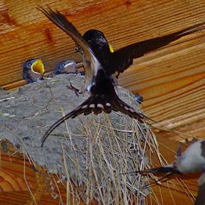 Birds pasari 1.jpg