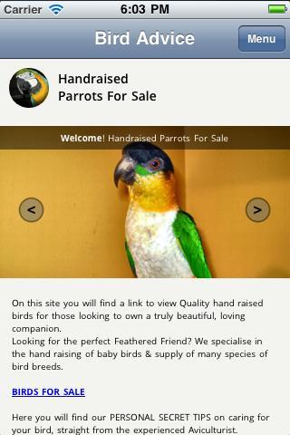 Bird Advice
