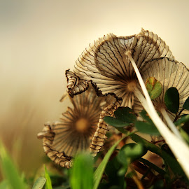 Mushroom IMG_4077 by Ponco Sujatmiko - Nature Up Close Mushrooms & Fungi ( Lighting, moods, mood lighting,  )