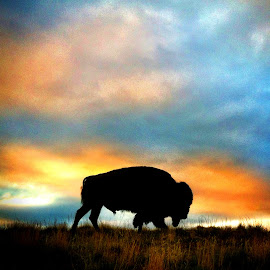 Tatanka by Bon Zeye - Instagram & Mobile iPhone ( black hills, buffalo, sky, wind cave, bison, silhouette, sunset )