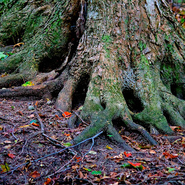 Roots by Nick Alaus - Nature Up Close Trees & Bushes